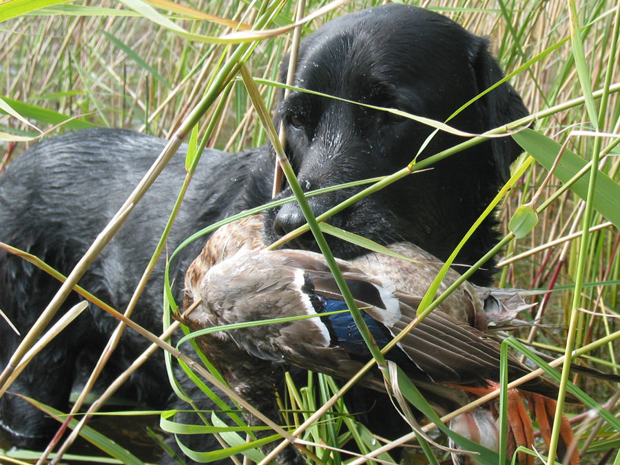 Era's Pete capercaillie-and-black-grouse-hunting